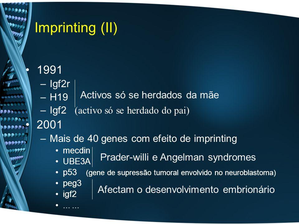 Imprinting (II) 1991 –Igf2r –H19 –Igf2 (activo só se herdado do pai) 2001 –Mais de 40 genes com efeito de imprinting mecdin UBE3A p53 (gene de supressão tumoral envolvido no neuroblastoma) peg3 igf2...