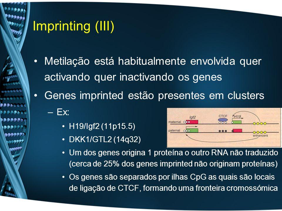 Imprinting (III) Metilação está habitualmente envolvida quer activando quer inactivando os genes Genes imprinted estão presentes em clusters –Ex: H19/Igf2 (11p15.5) DKK1/GTL2 (14q32) Um dos genes origina 1 proteína o outro RNA não traduzido (cerca de 25% dos genes imprinted não originam proteínas) Os genes são separados por ilhas CpG as quais são locais de ligação de CTCF, formando uma fronteira cromossómica