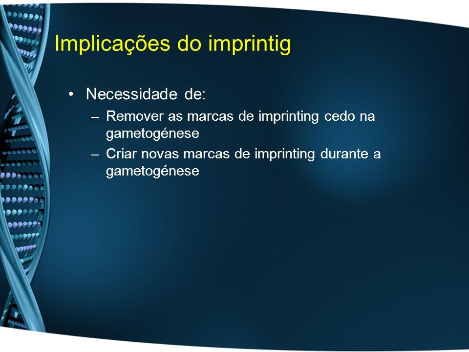 Implicações do imprintig Necessidade de: –Remover as marcas de imprinting cedo na gametogénese –Criar novas marcas de imprinting durante a gametogénese