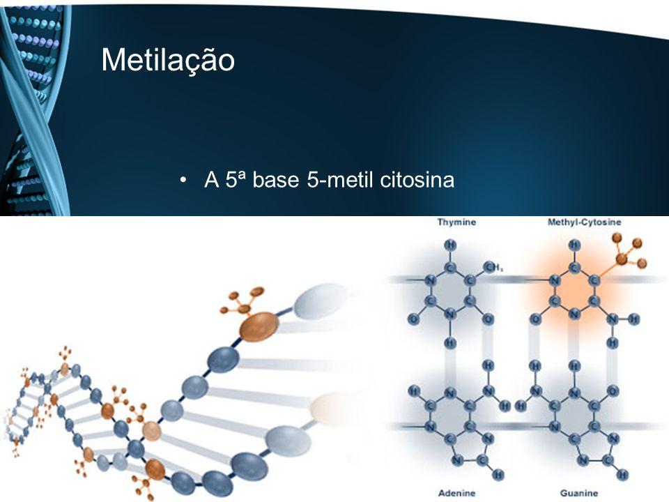 Metilação A 5ª base 5-metil citosina