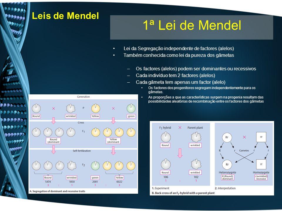 Leis de Mendel Lei da Segregação independente de factores (alelos) Também conhecida como lei da pureza dos gâmetas –Os factores (alelos) podem ser dom