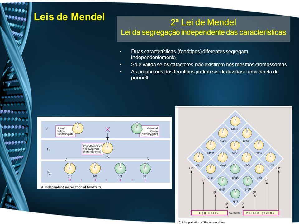 Leis de Mendel Duas características (fenótipos) diferentes segregam independentemente Só é válida se os caracteres não existirem nos mesmos cromossoma