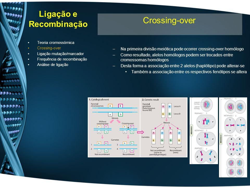 Ligação e Recombinação –Na primeira divisão meiótica pode ocorrer crossing-over homólogo –Como resultado, alelos homólogos podem ser trocados entre cr