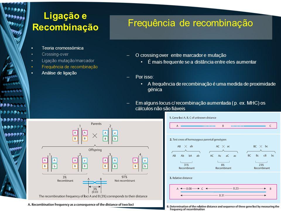 Ligação e Recombinação –O crossing over entre marcador e mutação É mais frequente se a distância entre eles aumentar –Por isso: A frequência de recomb