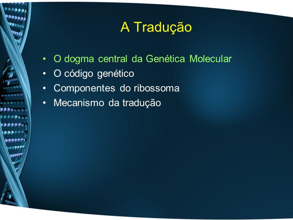 Tradução Após a tradução inicia-se a fase de modificação pós-traducional: –Glicosilação –Clivagem de péptido sinal –Pre-processamento por endopeptidases –Fosforilação –etc Animações: 1,212