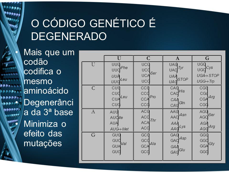 A Tradução O dogma central da Genética Molecular O código genético Componentes do ribossoma Mecanismo da tradução
