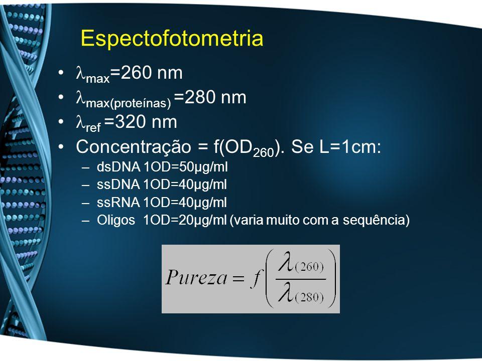 Espectofotometria max =260 nm max(proteínas) =280 nm ref =320 nm Concentração = f(OD 260 ). Se L=1cm: –dsDNA 1OD=50µg/ml –ssDNA 1OD=40µg/ml –ssRNA 1OD