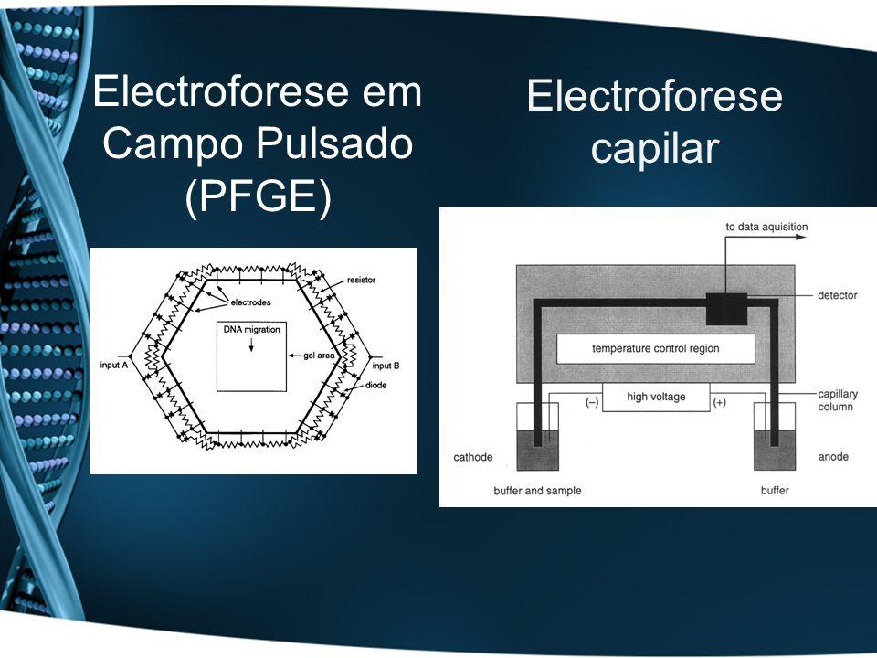 Electroforese em Campo Pulsado (PFGE) Electroforese capilar