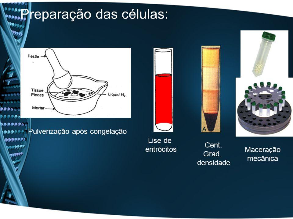 Preparação das células: Pulverização após congelação Lise de eritrócitos Cent. Grad. densidade Maceração mecânica