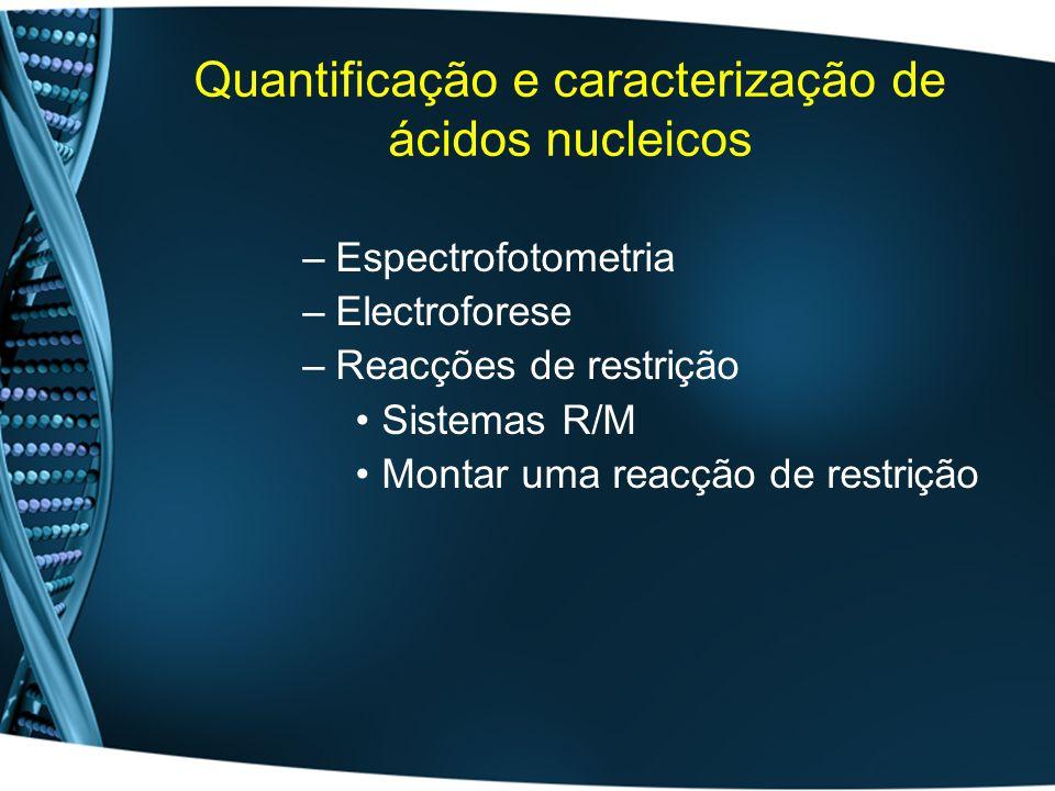 Quantificação e caracterização de ácidos nucleicos –Espectrofotometria –Electroforese –Reacções de restrição Sistemas R/M Montar uma reacção de restri