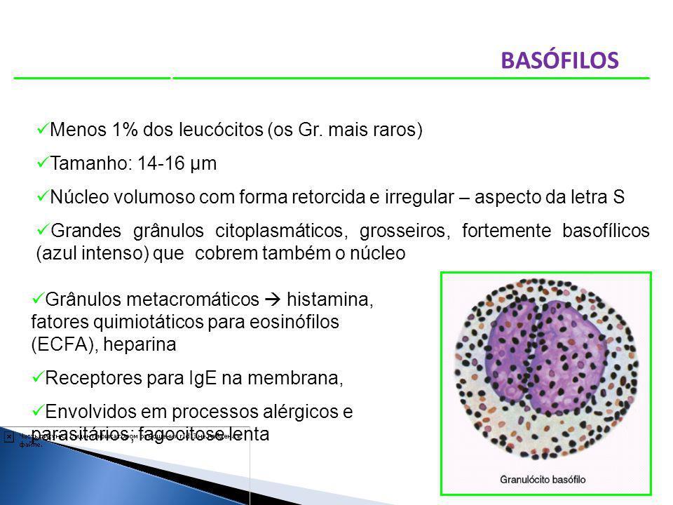 Menos 1% dos leucócitos (os Gr. mais raros) Tamanho: 14-16 µm Núcleo volumoso com forma retorcida e irregular – aspecto da letra S Grandes grânulos ci