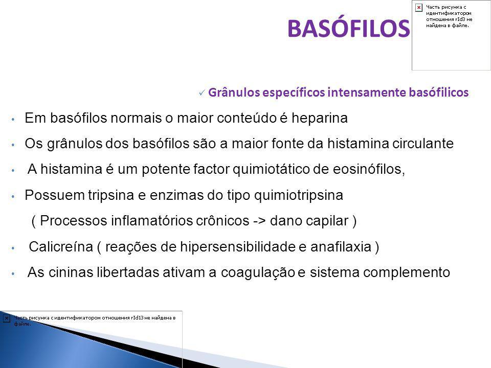 Grânulos específicos intensamente basófilicos Em basófilos normais o maior conteúdo é heparina Os grânulos dos basófilos são a maior fonte da histamin