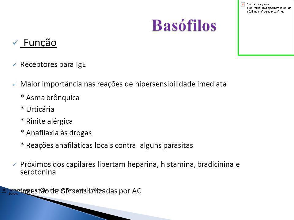 Função Receptores para IgE Maior importância nas reações de hipersensibilidade imediata * Asma brônquica * Urticária * Rinite alérgica * Anafilaxia às