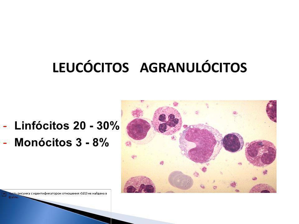 -Linfócitos 20 - 30% -Monócitos 3 - 8% LEUCÓCITOS AGRANULÓCITOS