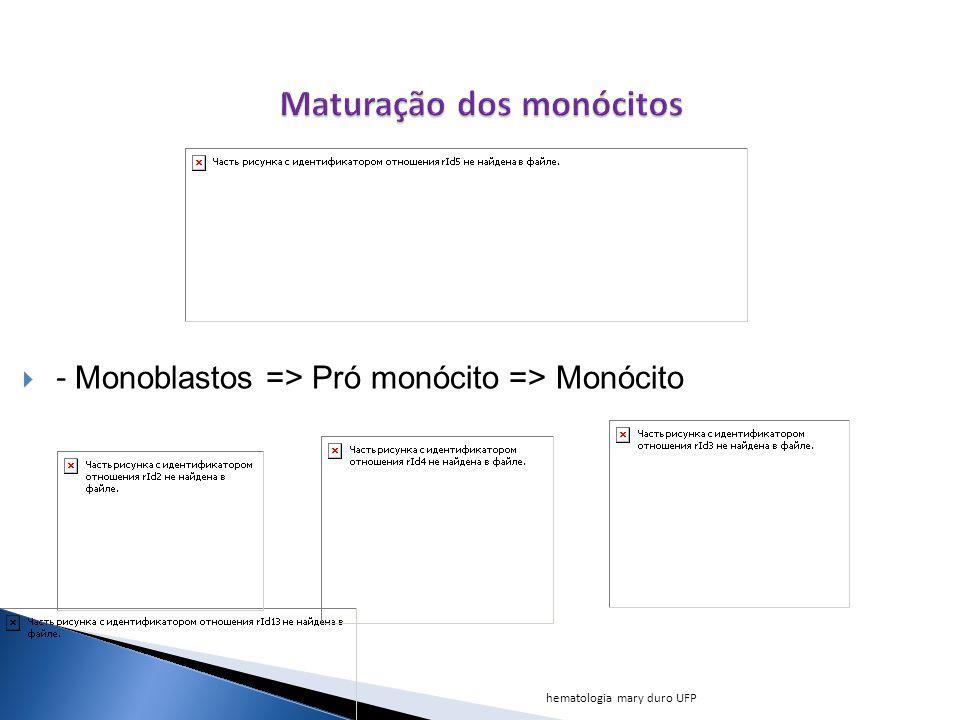 - Monoblastos => Pró monócito => Monócito hematologia mary duro UFP