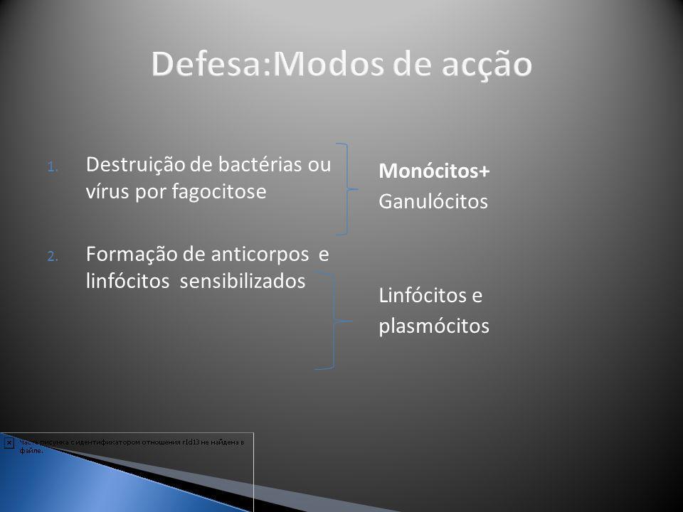 1. Destruição de bactérias ou vírus por fagocitose 2. Formação de anticorpos e linfócitos sensibilizados Monócitos+ Ganulócitos Linfócitos e plasmócit