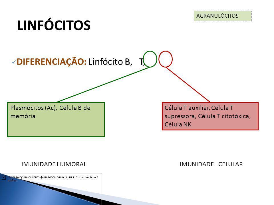 BT DIFERENCIAÇÃO: Linfócito B, T, NK LINFÓCITOS AGRANULÓCITOS Plasmócitos (Ac), Célula B de memória Célula T auxiliar, Célula T supressora, Célula T c