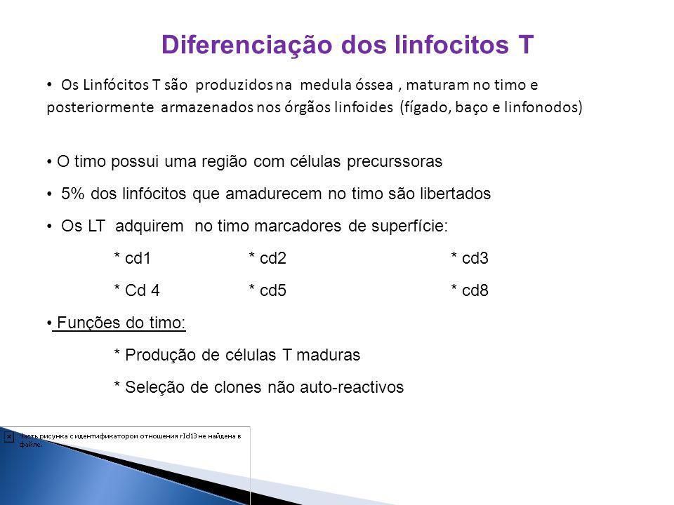 Diferenciação dos linfocitos T Os Linfócitos T são produzidos na medula óssea, maturam no timo e posteriormente armazenados nos órgãos linfoides (fíga
