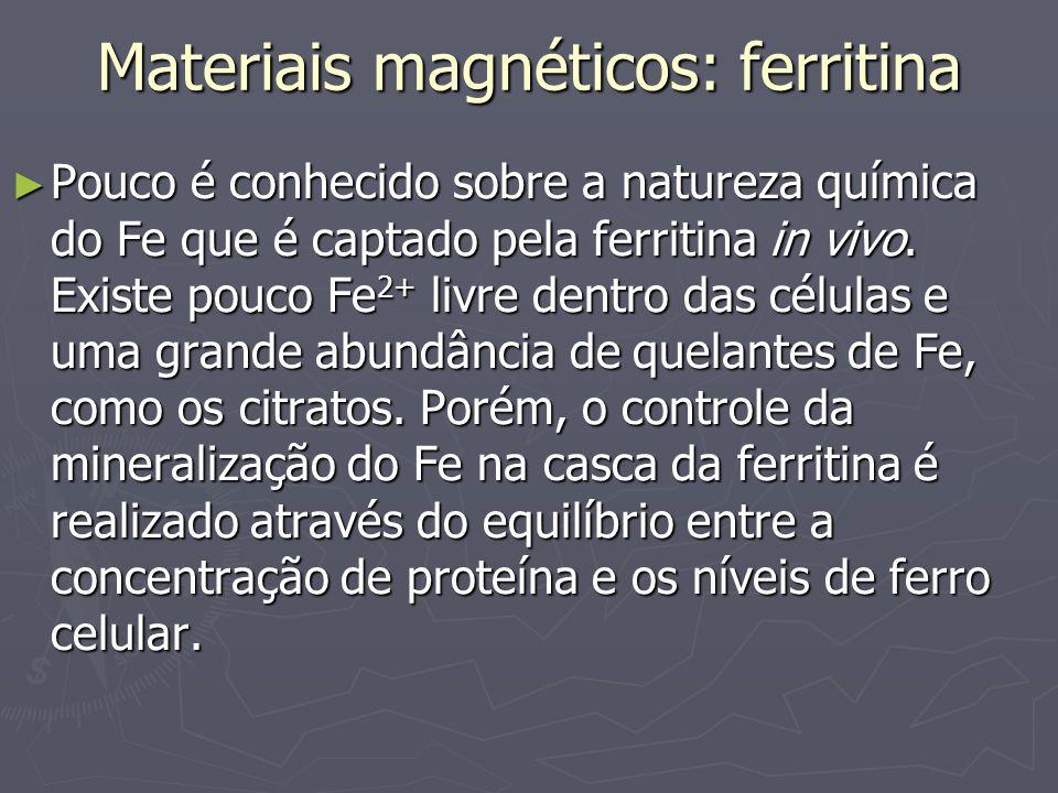 Materiais magnéticos: ferritina Pouco é conhecido sobre a natureza química do Fe que é captado pela ferritina in vivo. Existe pouco Fe 2+ livre dentro