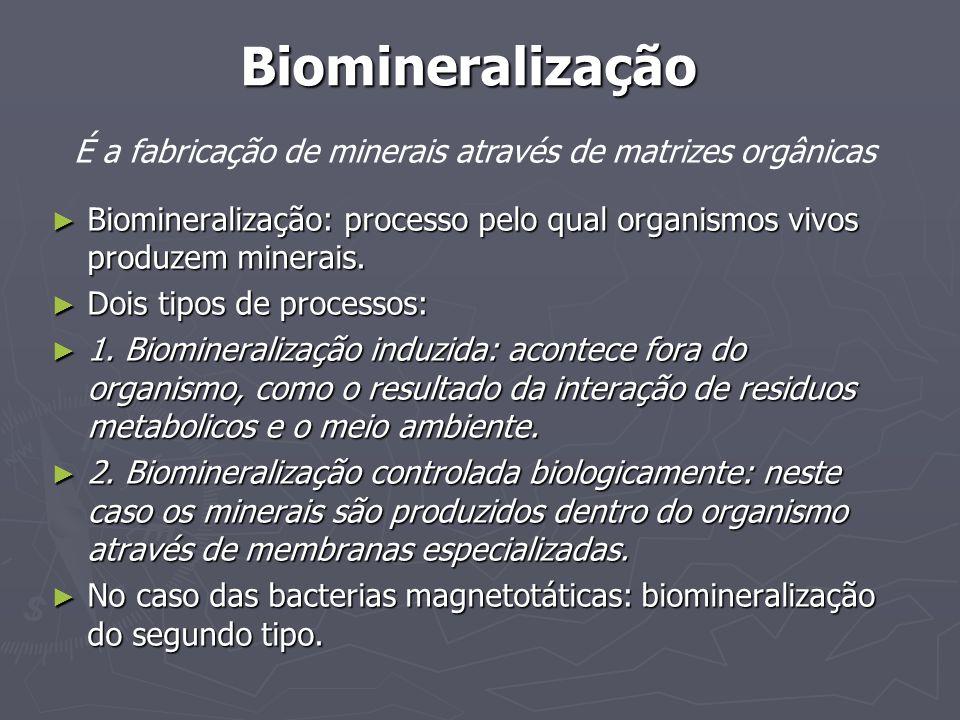 Biomineralização É a fabricação de minerais através de matrizes orgânicas Biomineralização: processo pelo qual organismos vivos produzem minerais. Bio