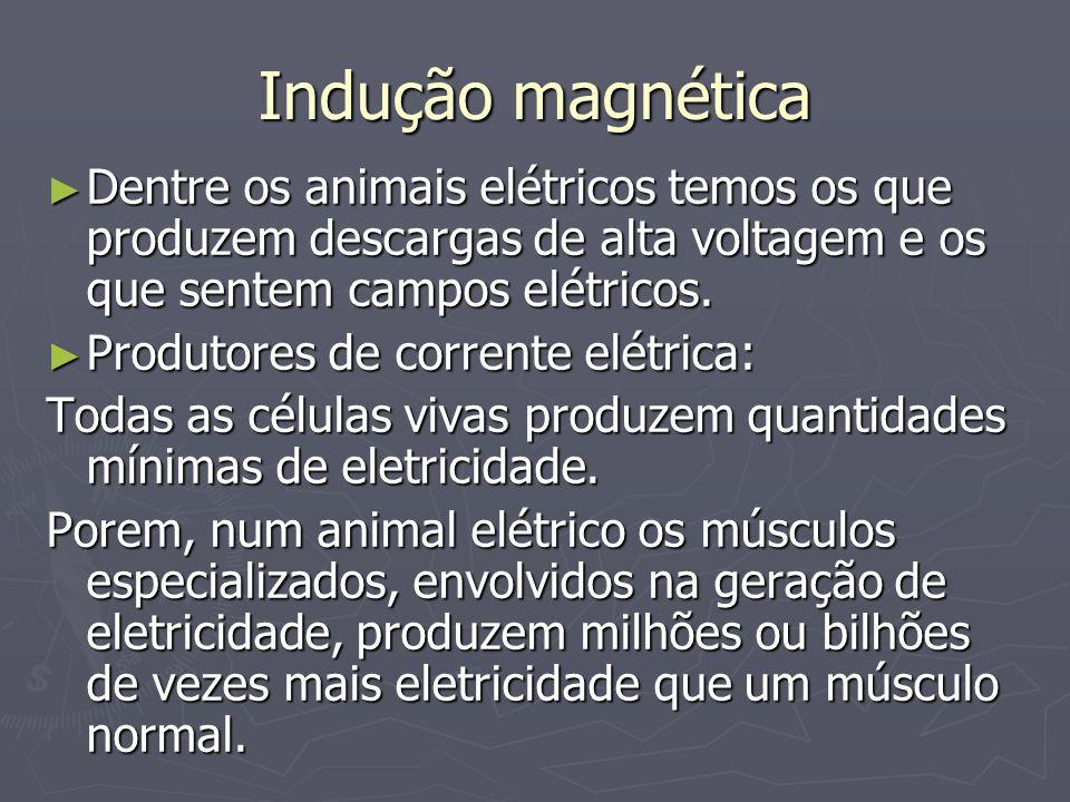 Indução magnética Dentre os animais elétricos temos os que produzem descargas de alta voltagem e os que sentem campos elétricos.