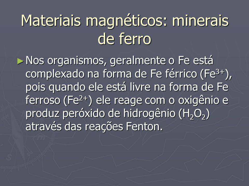 Materiais magnéticos: minerais de ferro Nos organismos, geralmente o Fe está complexado na forma de Fe férrico (Fe 3+ ), pois quando ele está livre na forma de Fe ferroso (Fe 2+ ) ele reage com o oxigênio e produz peróxido de hidrogênio (H 2 O 2 ) através das reações Fenton.