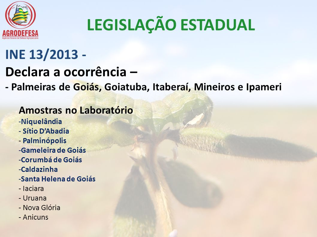 INE 13/2013 - Declara a ocorrência – - Palmeiras de Goiás, Goiatuba, Itaberaí, Mineiros e Ipameri Amostras no Laboratório -Niquelândia - Sítio DAbadia