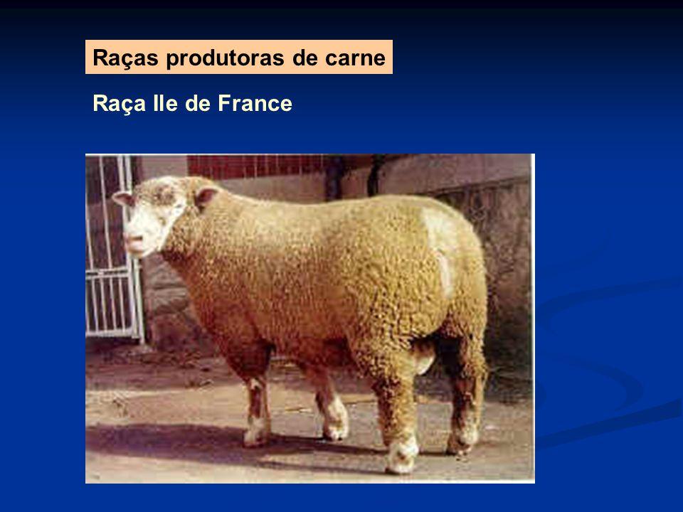 Raças produtoras de carne Raça Ile de France
