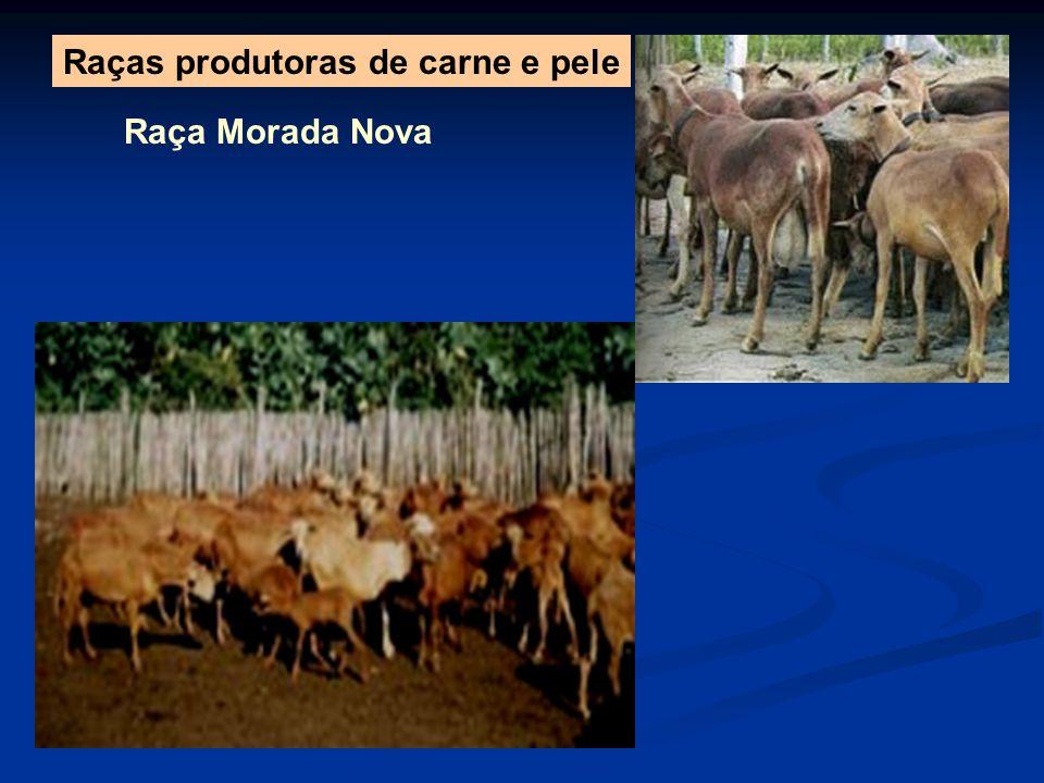 Raça Morada Nova Raças produtoras de carne e pele