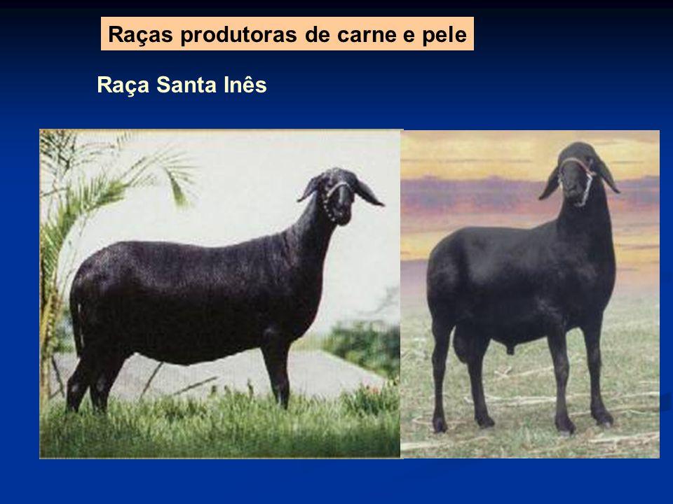 Raça Santa Inês Raças produtoras de carne e pele