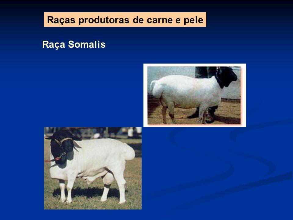 Raça Somalis Raças produtoras de carne e pele