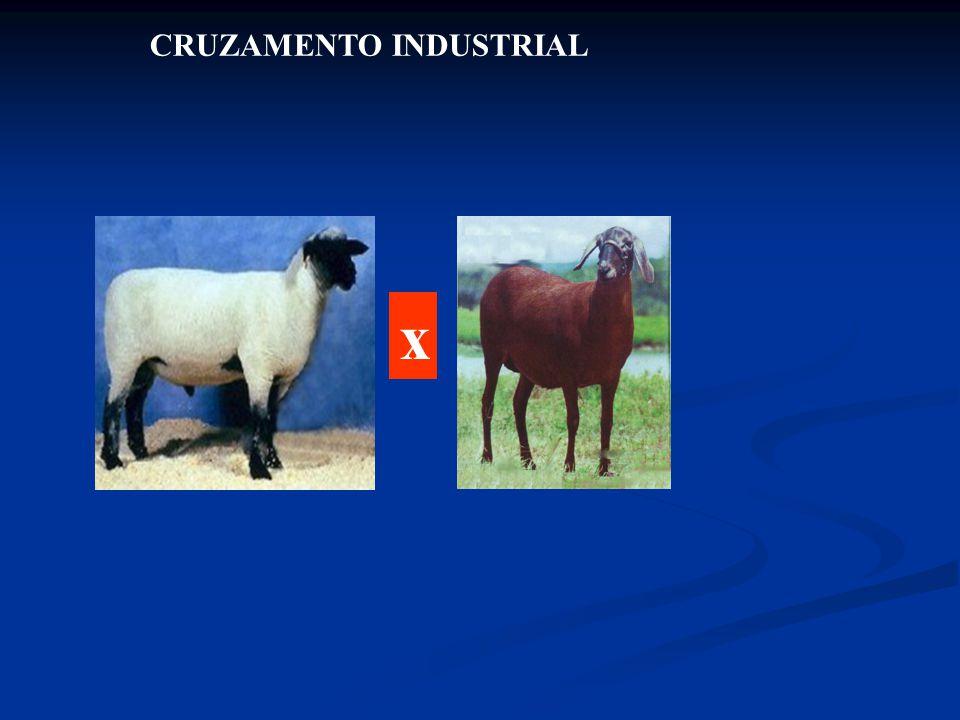 CRUZAMENTO INDUSTRIAL x
