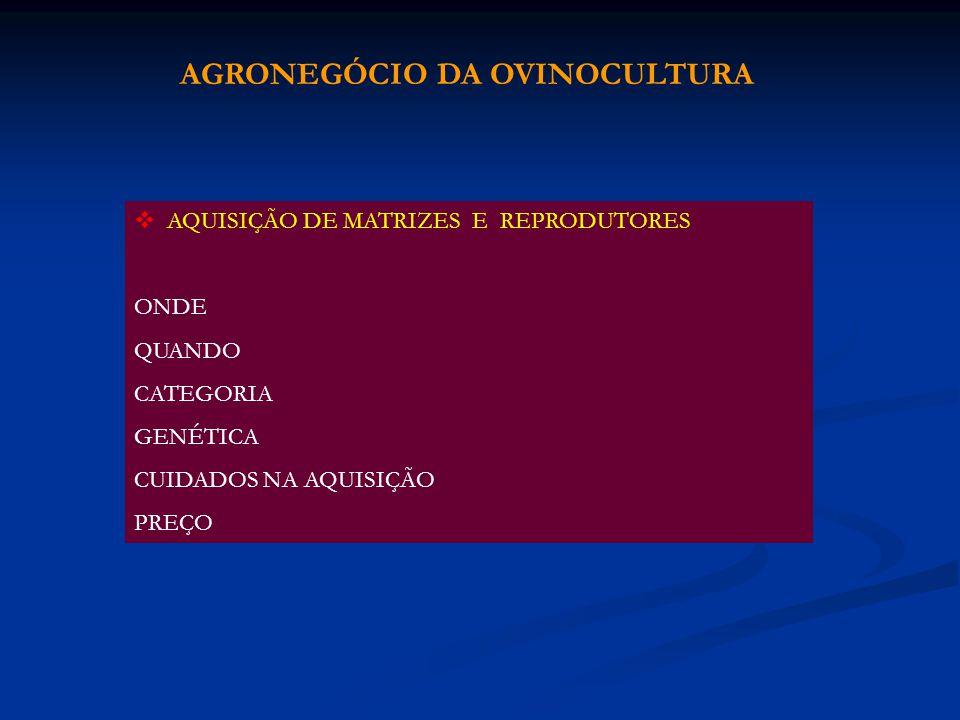 AQUISIÇÃO DE MATRIZES E REPRODUTORES ONDE QUANDO CATEGORIA GENÉTICA CUIDADOS NA AQUISIÇÃO PREÇO AGRONEGÓCIO DA OVINOCULTURA