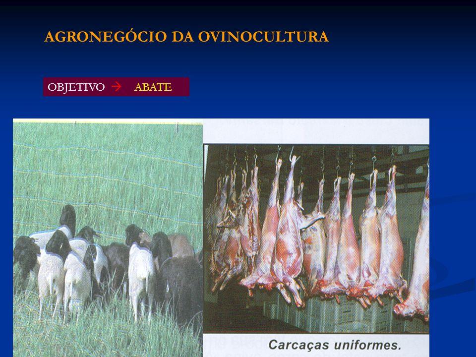 OBJETIVO ABATE AGRONEGÓCIO DA OVINOCULTURA