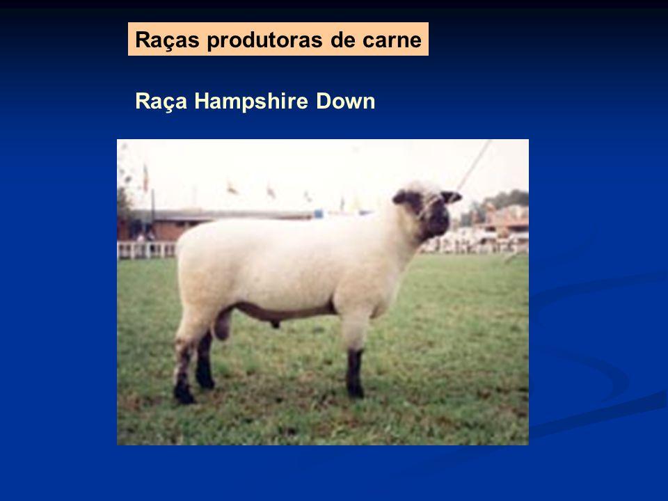 Raças produtoras de carne Raça Hampshire Down