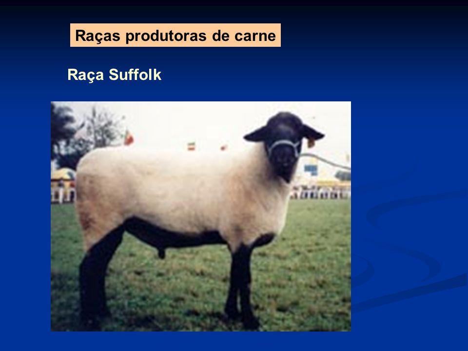 Raças produtoras de carne Raça Suffolk