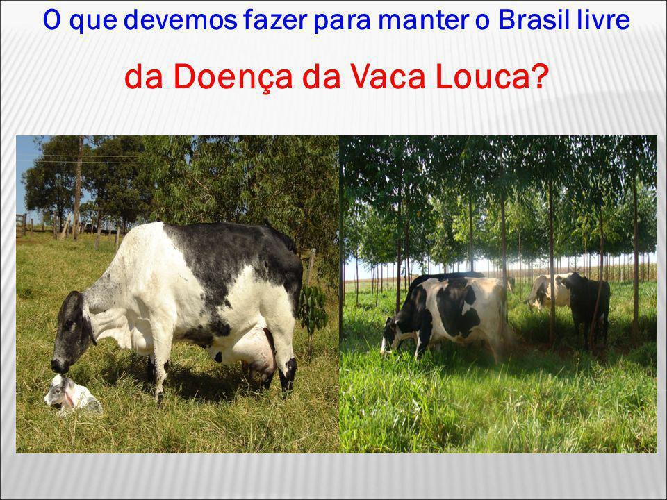 O que devemos fazer para manter o Brasil livre da Doença da Vaca Louca?