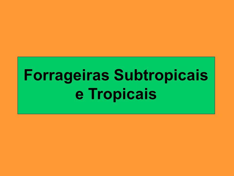 Forrageiras Subtropicais e Tropicais