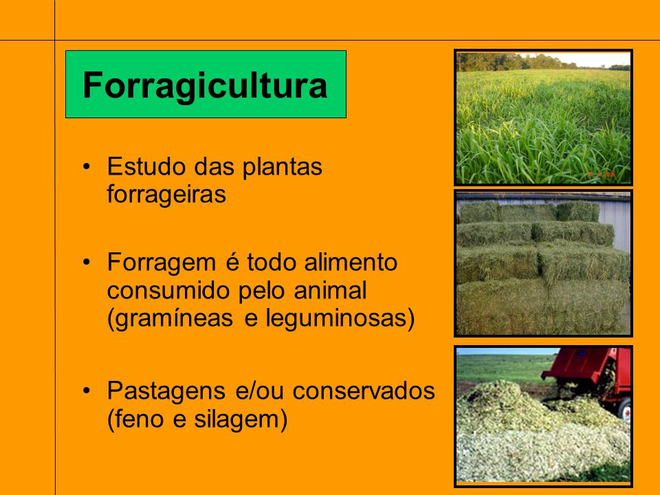 Estudo das plantas forrageiras Forragem é todo alimento consumido pelo animal (gramíneas e leguminosas) Pastagens e/ou conservados (feno e silagem) Fo
