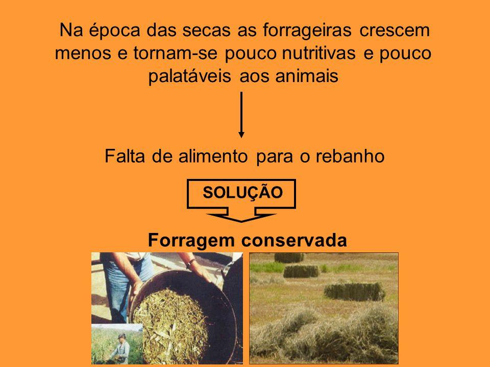 Na época das secas as forrageiras crescem menos e tornam-se pouco nutritivas e pouco palatáveis aos animais Falta de alimento para o rebanho SOLUÇÃO Forragem conservada