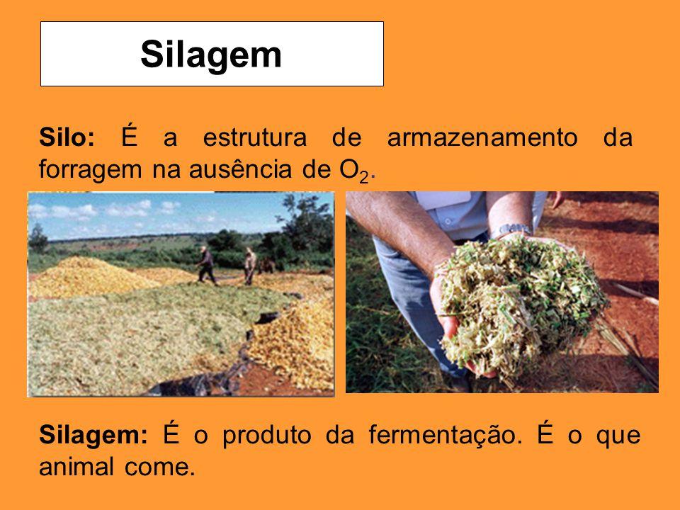 Silo: É a estrutura de armazenamento da forragem na ausência de O 2. Silagem Silagem: É o produto da fermentação. É o que animal come.