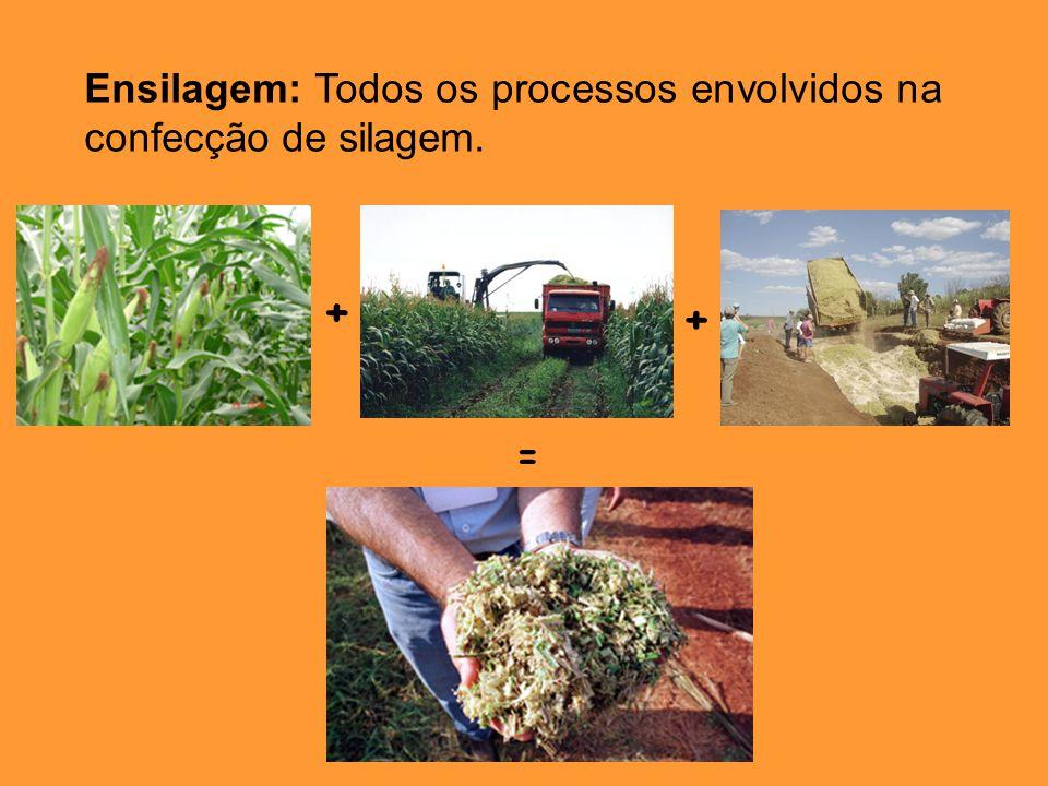 + + = Ensilagem: Todos os processos envolvidos na confecção de silagem.