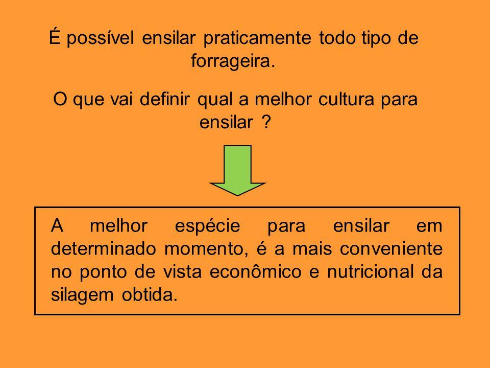É possível ensilar praticamente todo tipo de forrageira. O que vai definir qual a melhor cultura para ensilar ? A melhor espécie para ensilar em deter