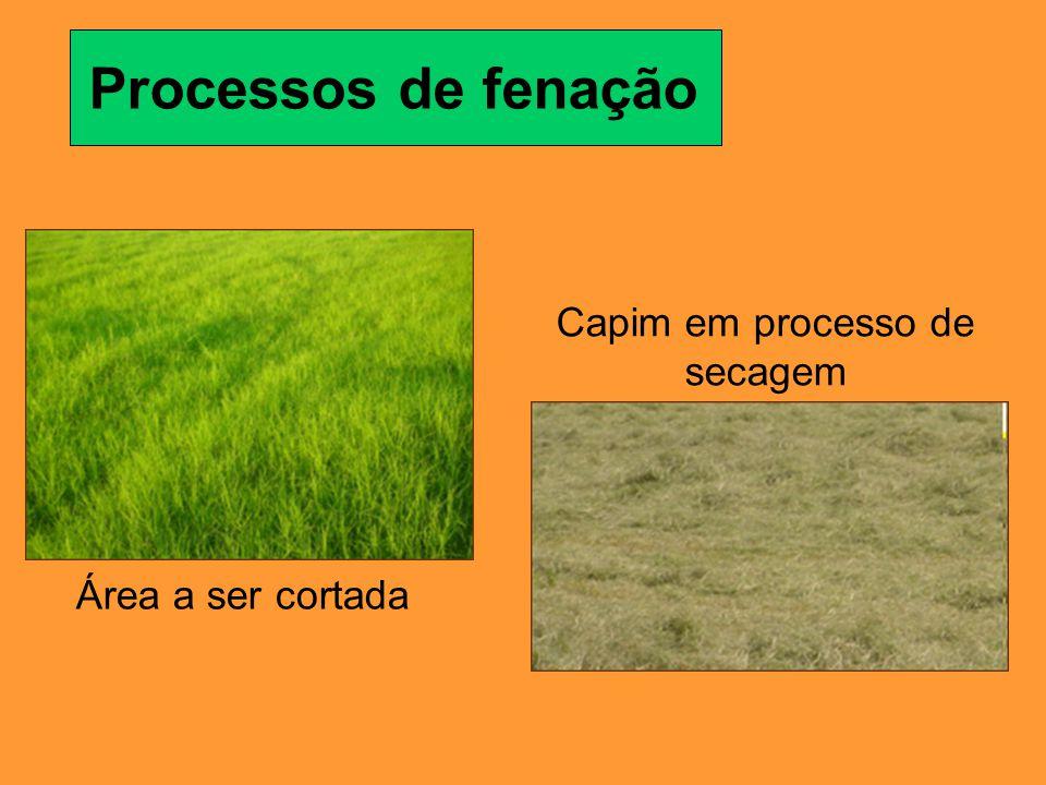 Área a ser cortada Capim em processo de secagem Processos de fenação