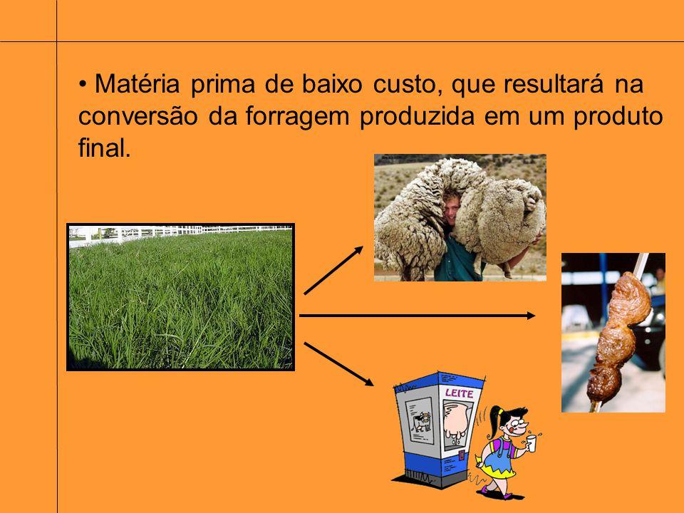 Escolha da Planta forrageira utilizada Avaliação das sementes ou mudas Avaliação do solo - correção e disponibilidade de nutrientes Utilização das máquinas no solo Época da semeadura Métodos de plantio Estabelecimento de Plantas Forrageiras