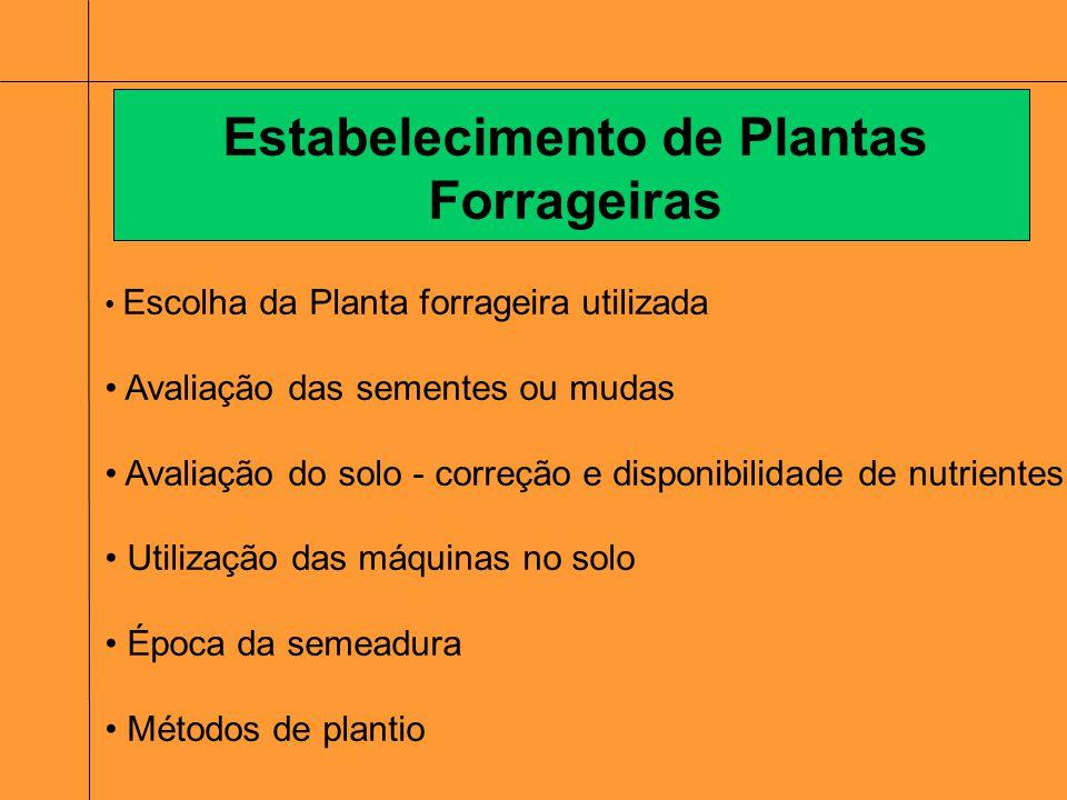 Escolha da Planta forrageira utilizada Avaliação das sementes ou mudas Avaliação do solo - correção e disponibilidade de nutrientes Utilização das máq
