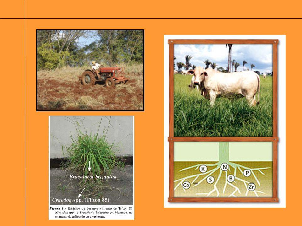 Forragem produzida Forragem consumida Produto Animal Recursos: Solo, Clima, Plantas Produção Crescimento Utilização Conversão Pastejo