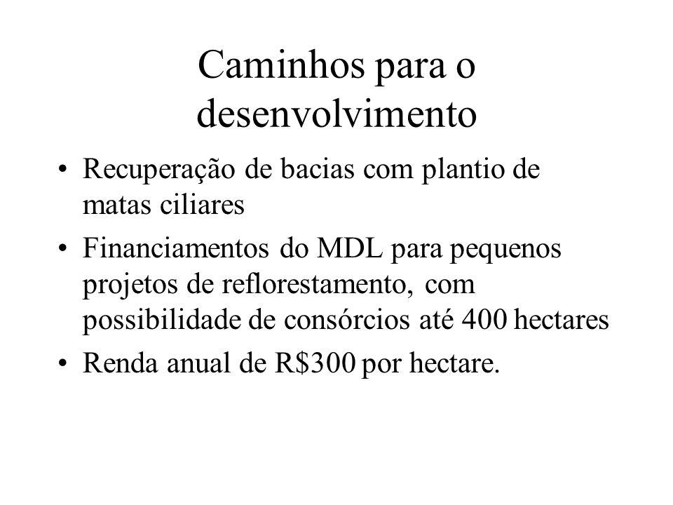 Caminhos para o desenvolvimento Recuperação de bacias com plantio de matas ciliares Financiamentos do MDL para pequenos projetos de reflorestamento, com possibilidade de consórcios até 400 hectares Renda anual de R$300 por hectare.