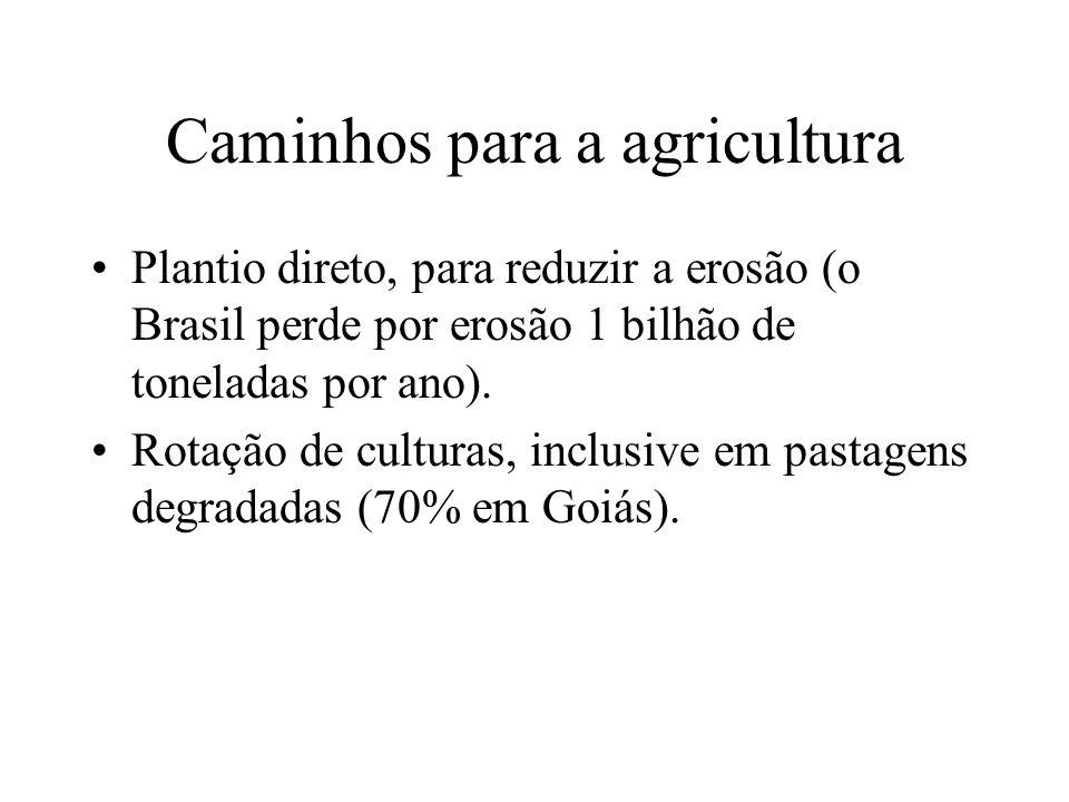 Caminhos para a agricultura Plantio direto, para reduzir a erosão (o Brasil perde por erosão 1 bilhão de toneladas por ano).