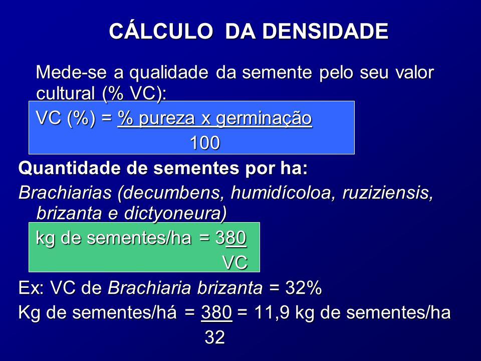 CÁLCULO DA DENSIDADE Mede-se a qualidade da semente pelo seu valor cultural (% VC): VC (%) = % pureza x germinação 100 100 Quantidade de sementes por ha: Brachiarias (decumbens, humidícoloa, ruziziensis, brizanta e dictyoneura) kg de sementes/ha = 380 VC VC Ex: VC de Brachiaria brizanta = 32% Kg de sementes/há = 380 = 11,9 kg de sementes/ha 32 32